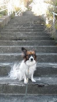 スタート階段.jpg