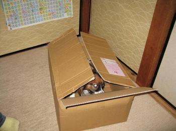 箱の中身.jpg